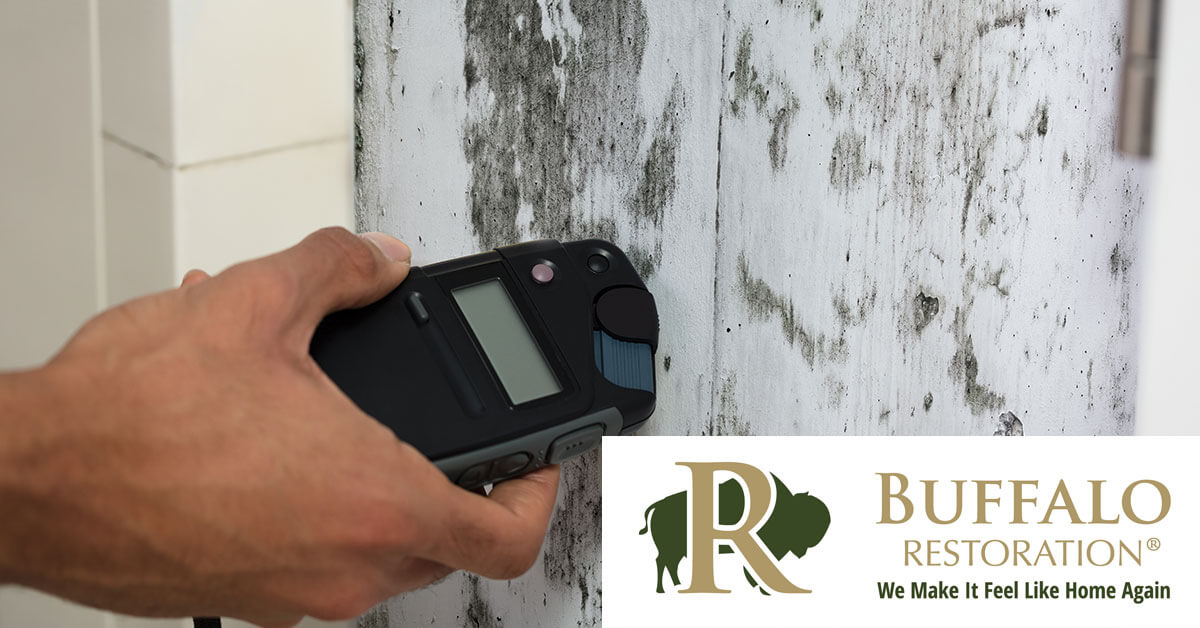 Mold Mitigation in Cooke City, MT
