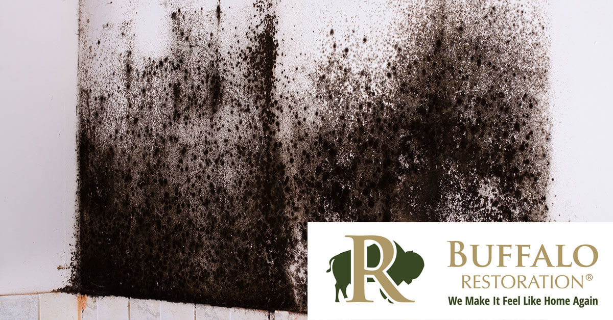 Mold Removal in Pray, MT
