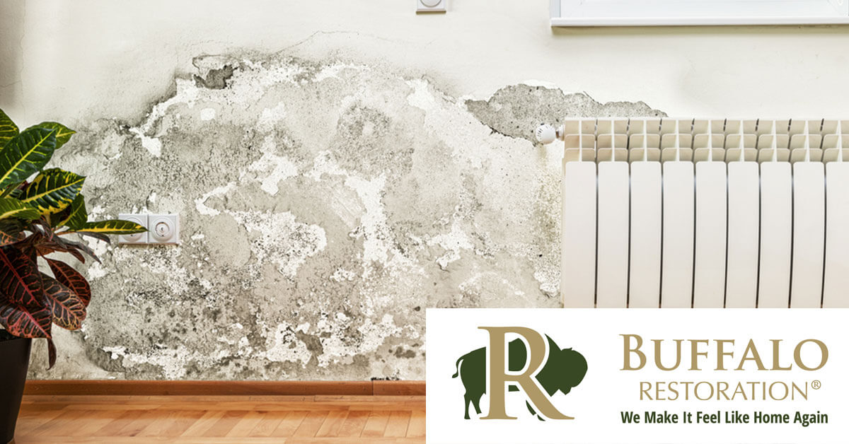Mold Remediation in Cooke City, MT