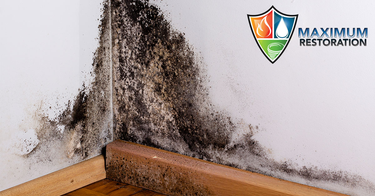 Professional Mold Removal in Centerville, OH