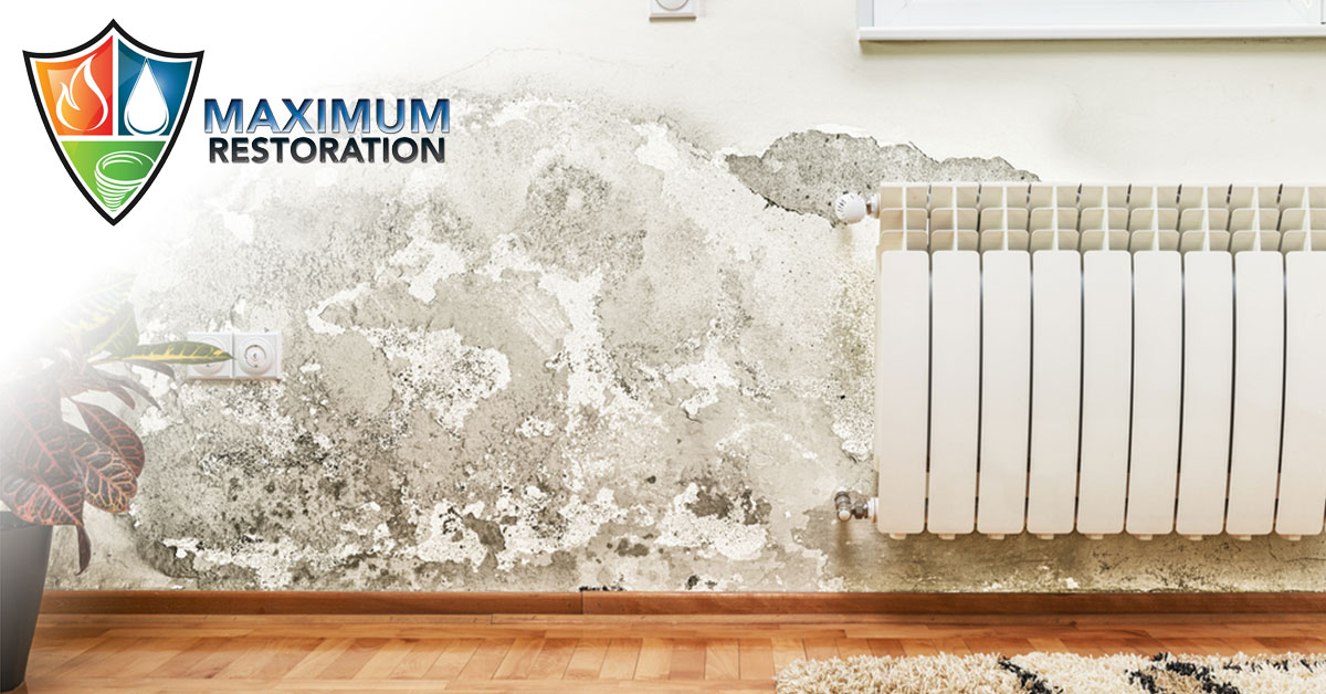 Professional Mold Mitigation in Bellbrook, OH