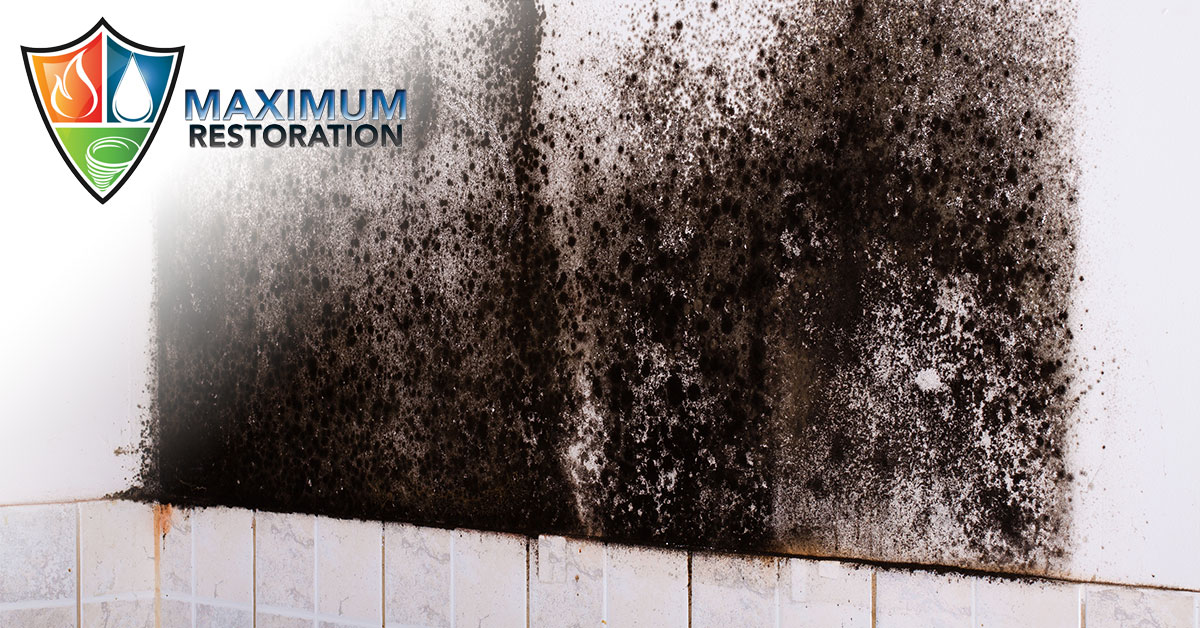 Professional Mold Inspections in Oakwood, OH