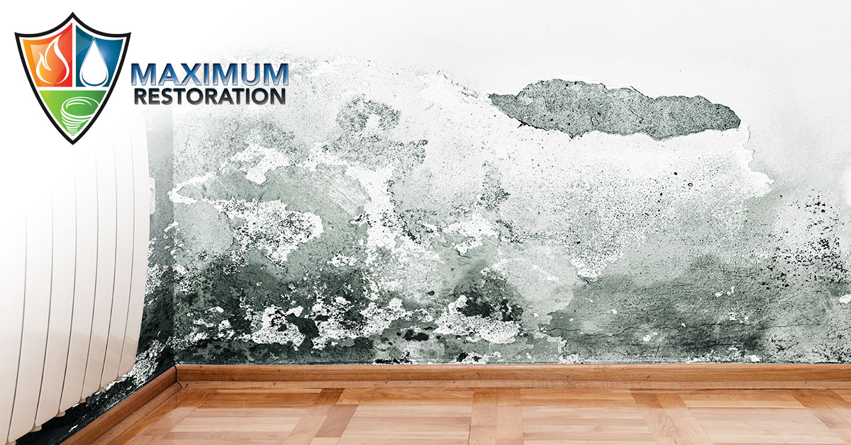 Professional Mold Inspections in Dayton, OH