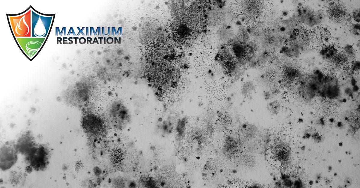 Professional Mold Remediation in Miamisburg, OH