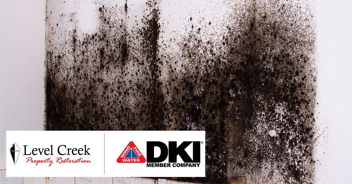 Mold Mitigation in Dawsonville, GA