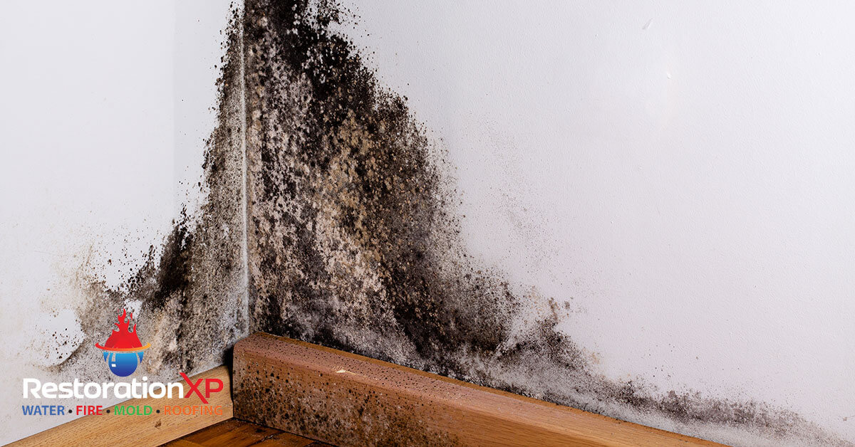 Certified mold abatement in Plano, TX