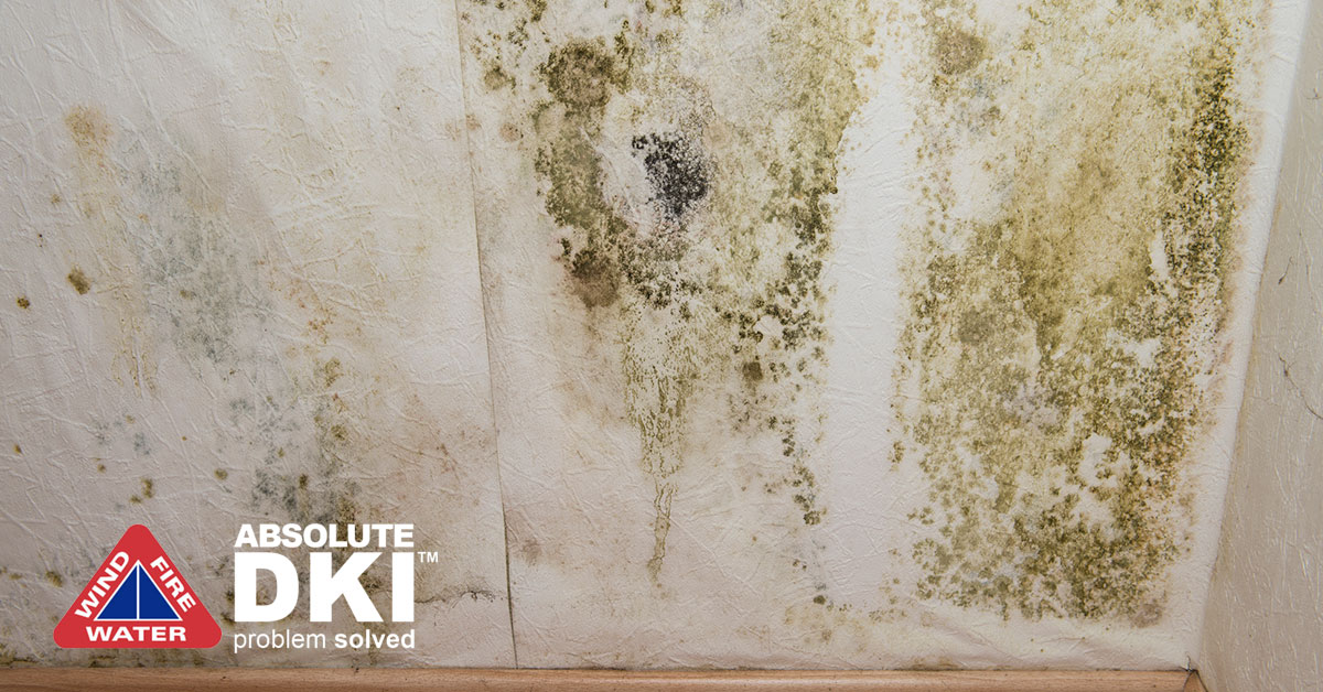 Mold Damage in Paddock Lake, WI