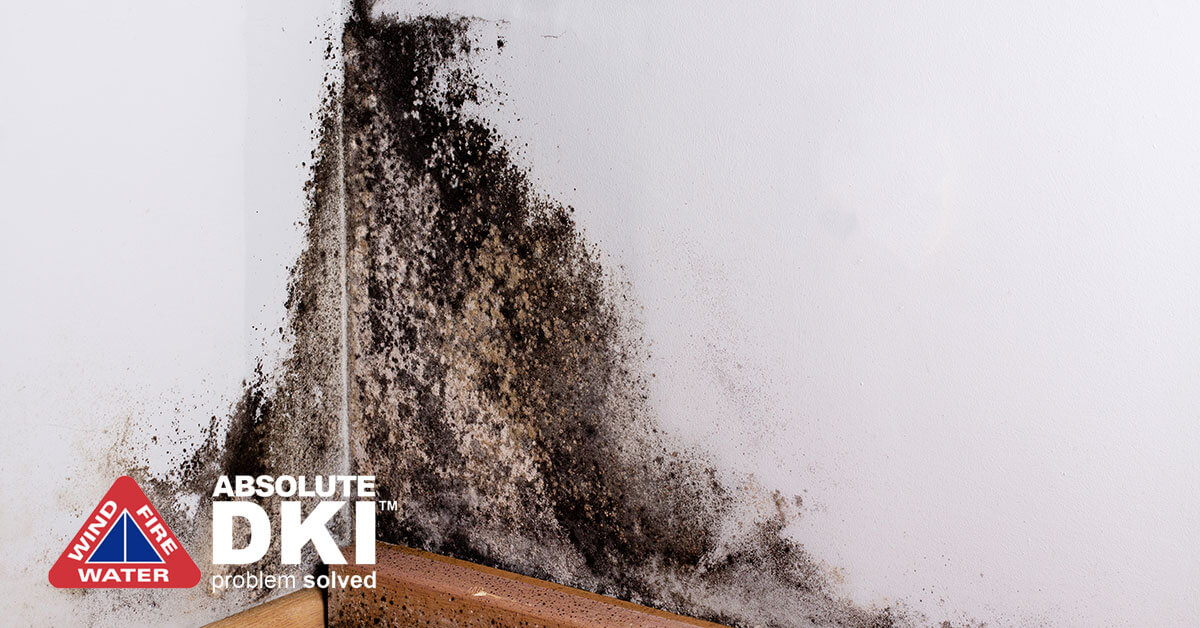 Mold Mitigation in Paddock Lake, WI
