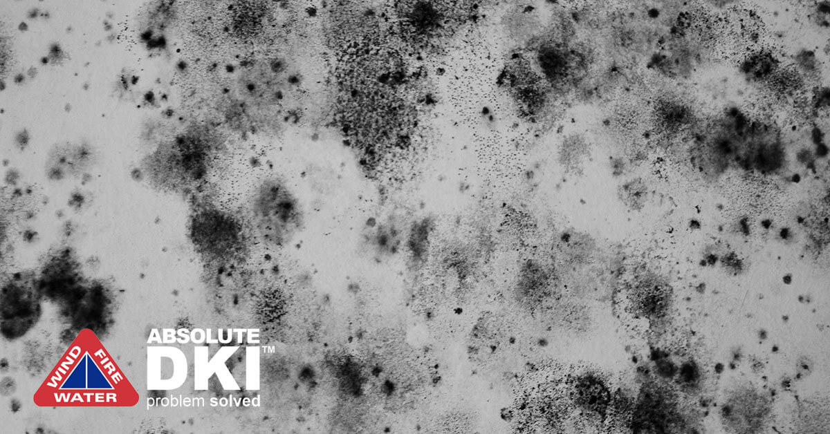 Mold Remediation in Racine, WI