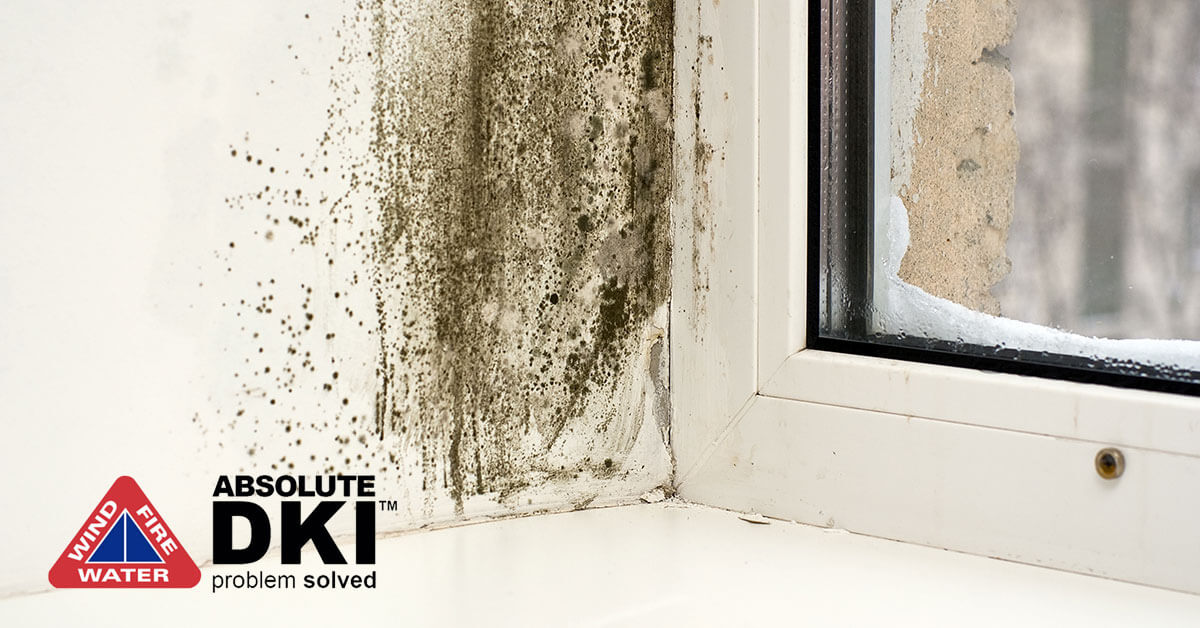 Mold Abatement in Racine, WI