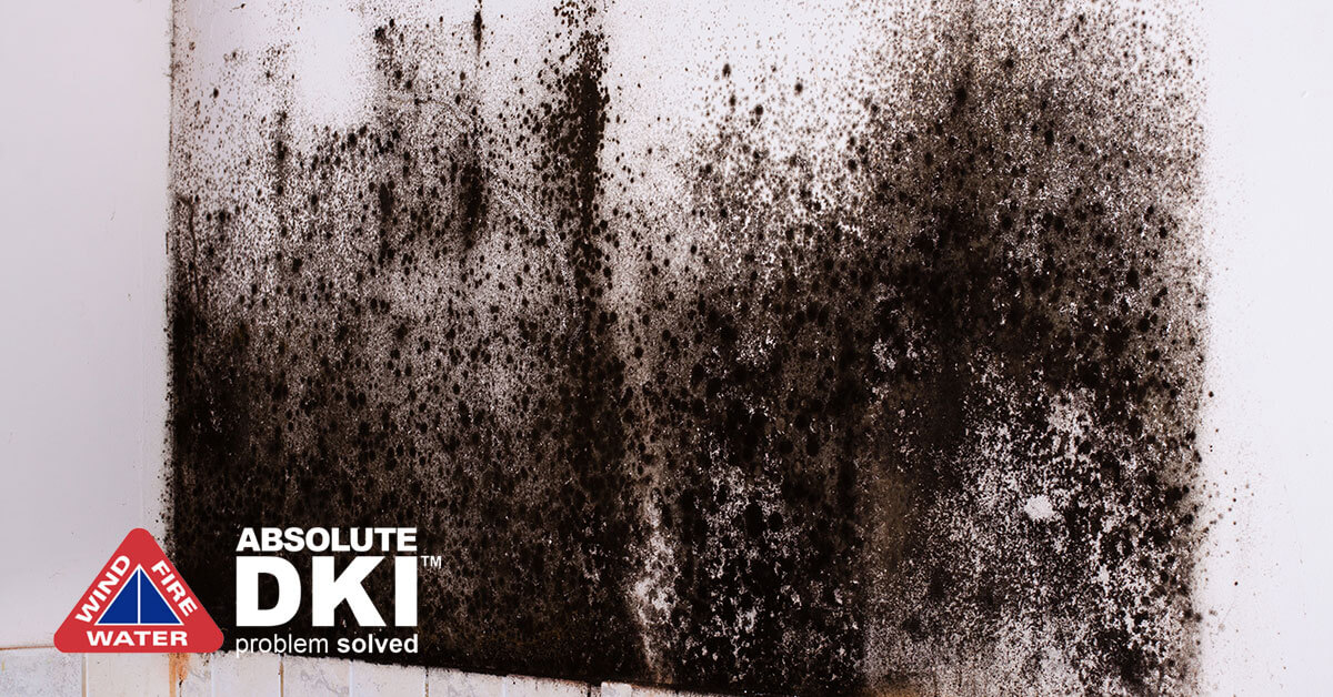 Mold Damage in Racine, WI
