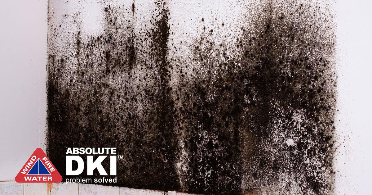 Mold Damage in Kenosha, WI