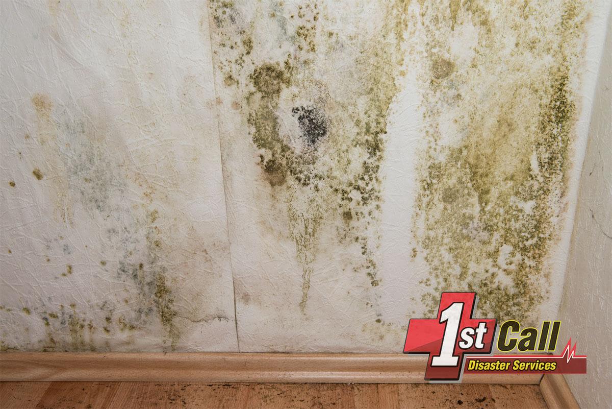 Mold Mitigation in Villa Hills, KY