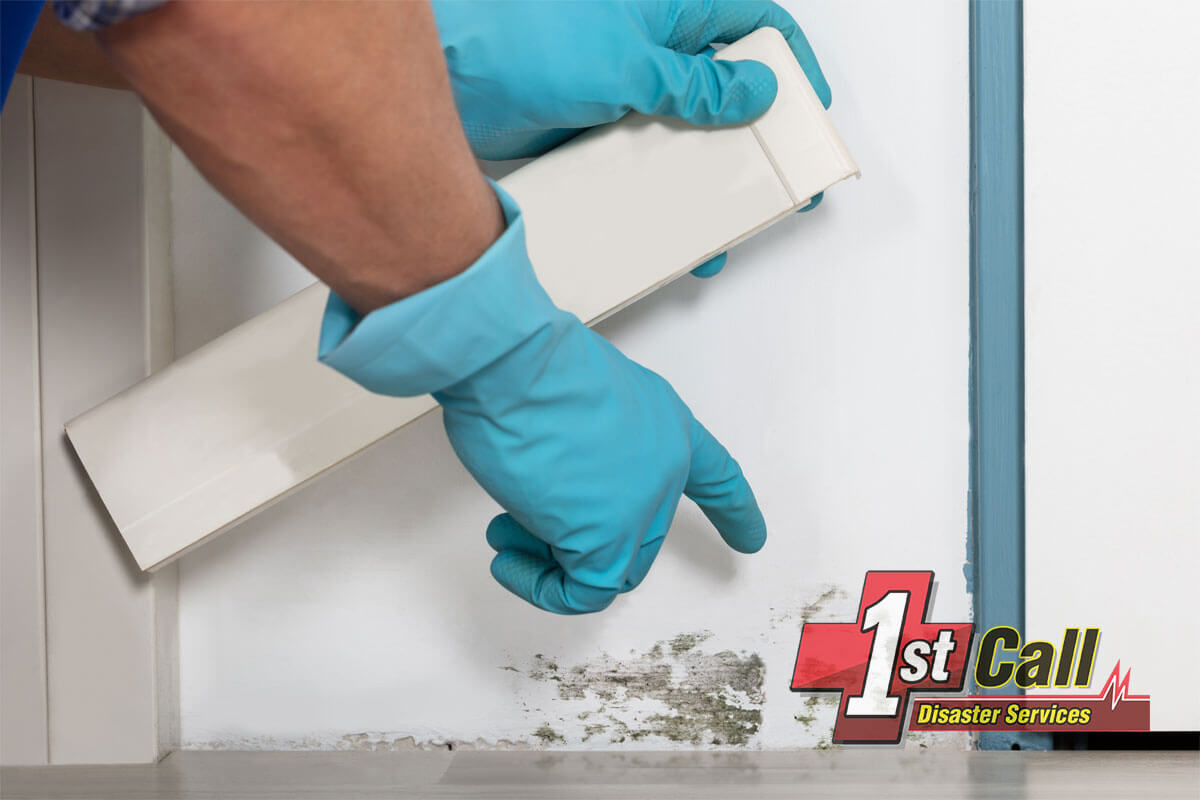 Mold Mitigation in Newport, KY
