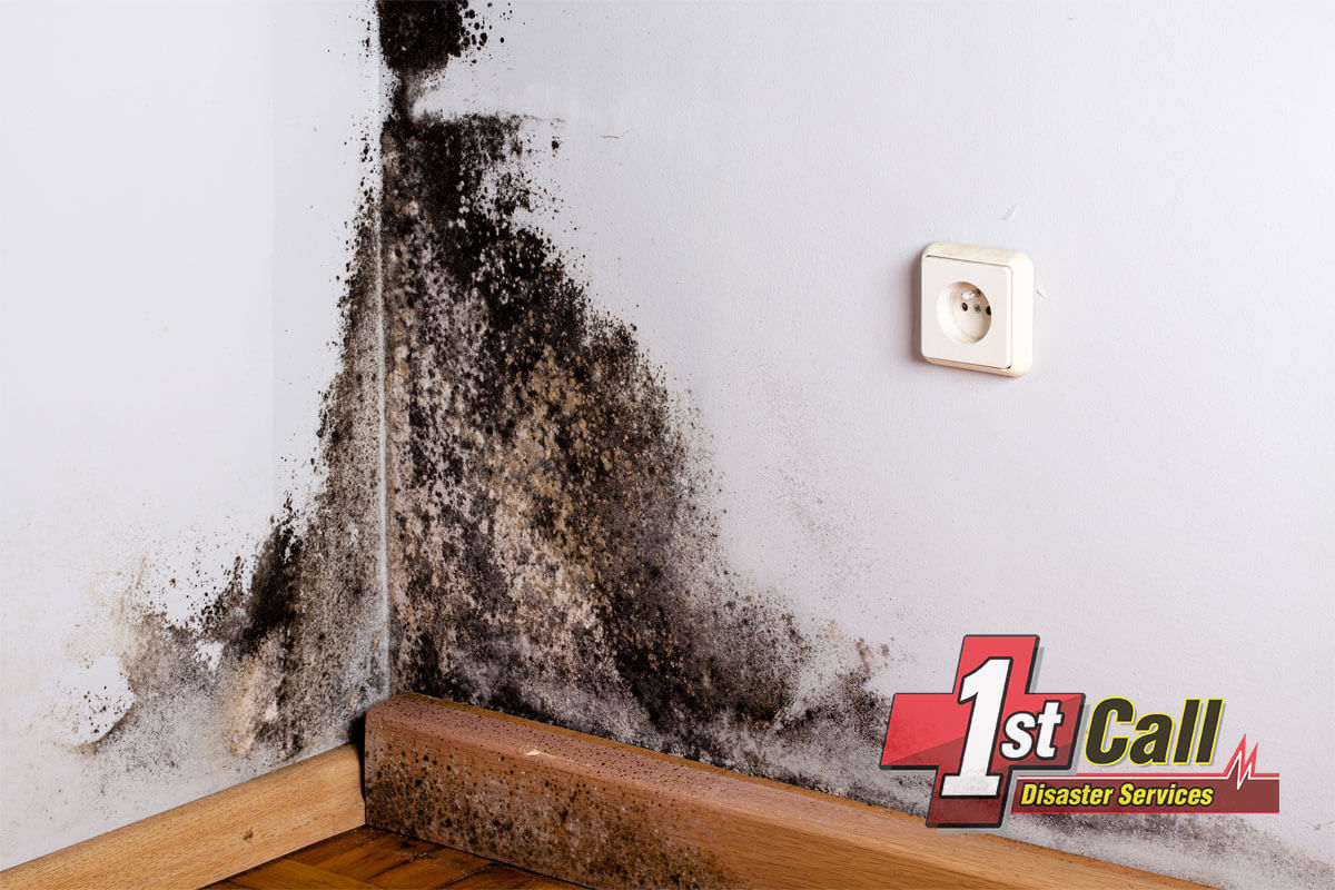 Mold Mitigation in Florence, KY