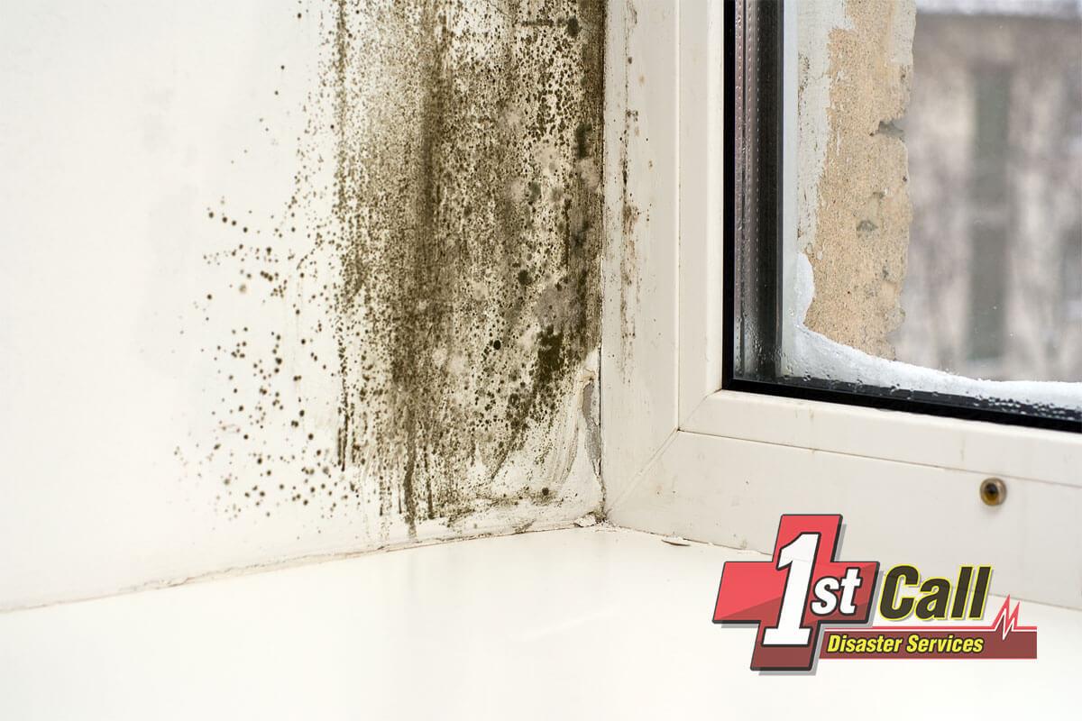 Mold Remediation in Cincinnati Area