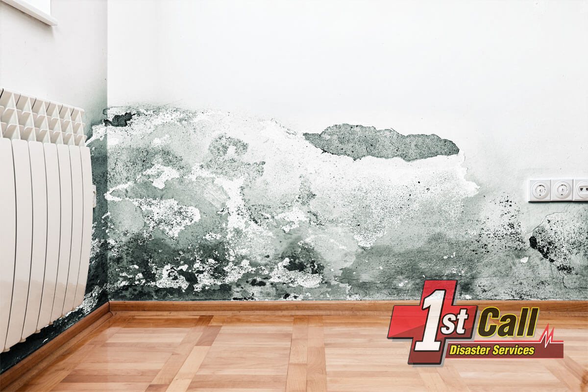Mold Mitigation in Edgewood, KY