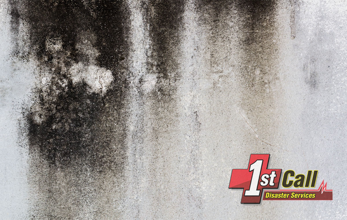 Mold Remediation in Melbourne, KY