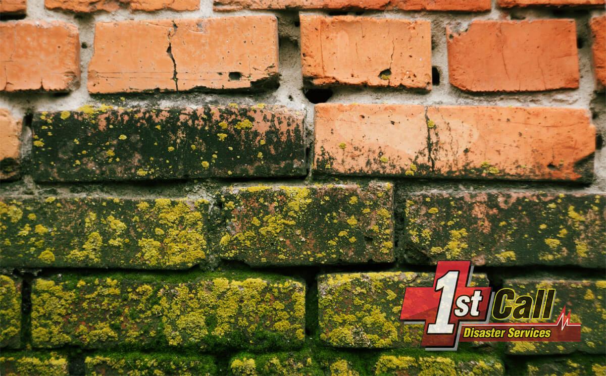 Mold Removal in Cincinnati Area