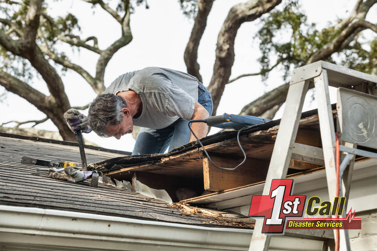 Raccoon Damage Restoration in Melbourne, KY