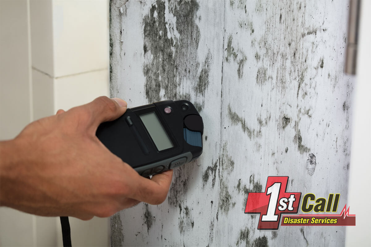 Mold Abatement in Woodlawn, KY