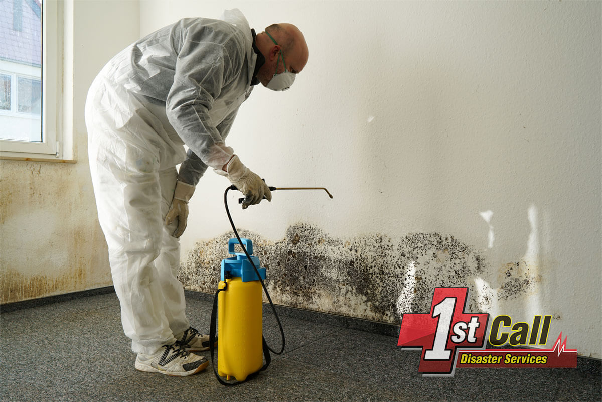 Mold Remediation in Southgate, KY