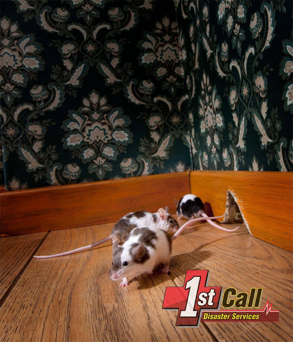 Animal Damage Cleanup in Cincinnati Area