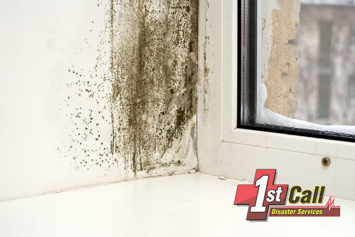 Mold Mitigation in Union, KY