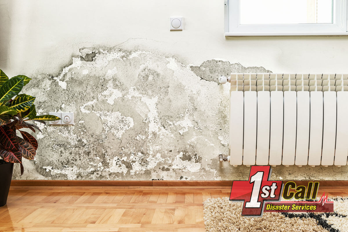 Mold Mitigation in Cincinnati Area