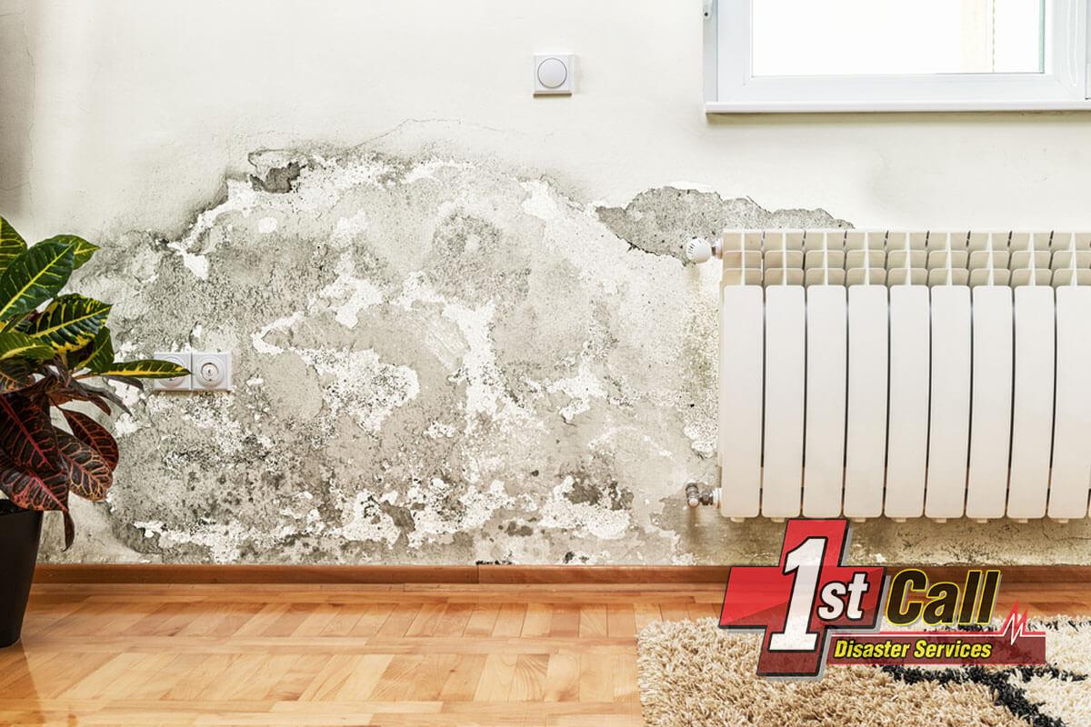 Mold Mitigation in Erlanger, KY
