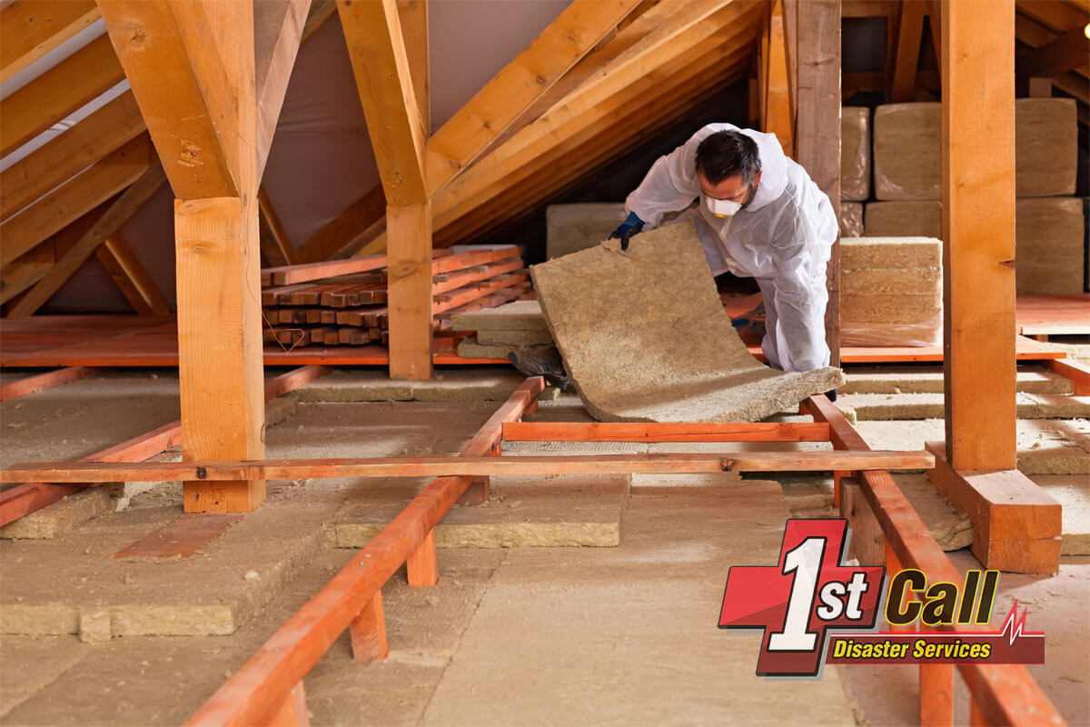 Raccoon Damage Cleanup in Fort Mitchell, KY