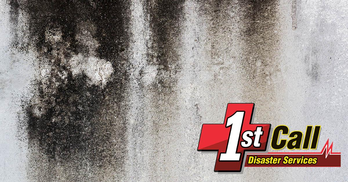 Certified Mold Damage Restoration in Union, KY