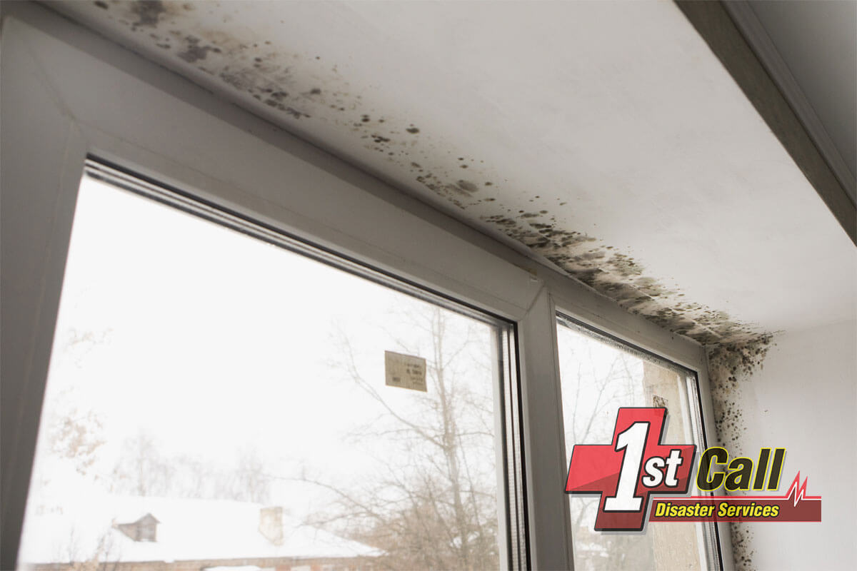 Mold Mitigation in Crittenden, KY