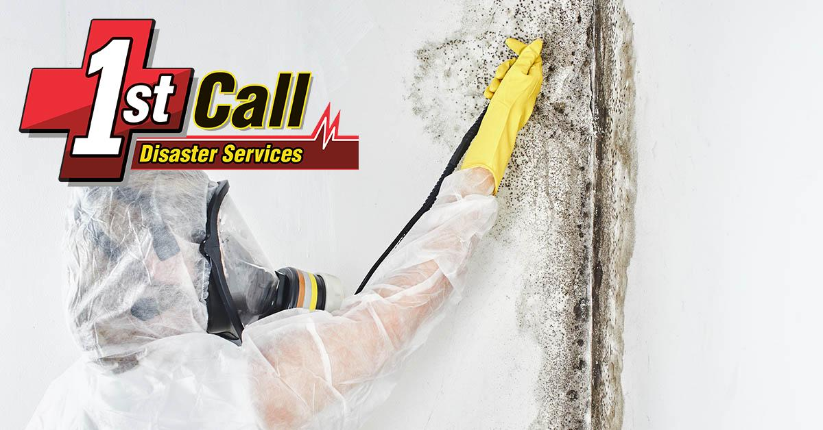 Certified Mold Removal in Newport, KY