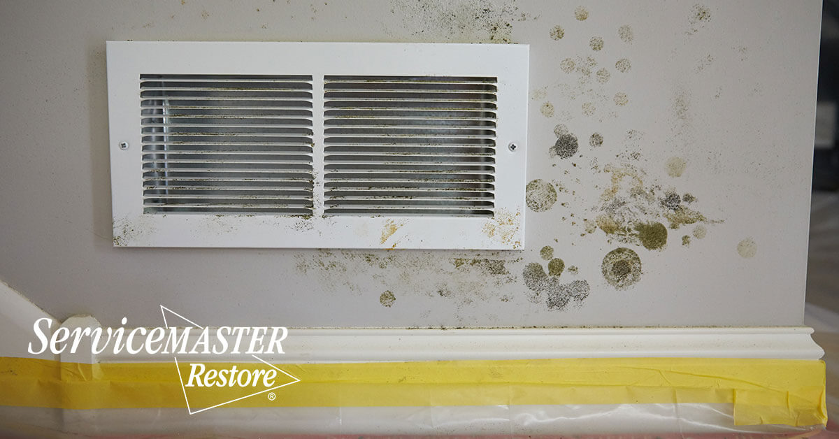 Mold Abatement in Gordonsville, VA