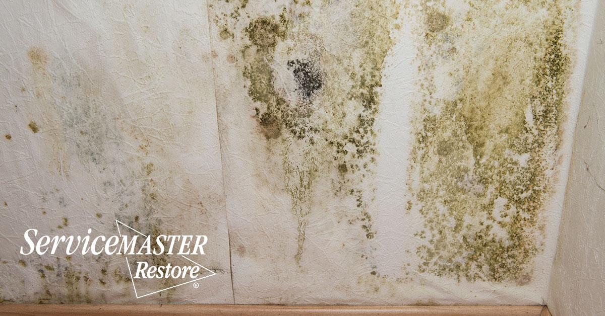 Mold Removal in Orange, VA