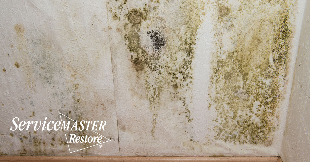 Mold Removal in The Plains, VA