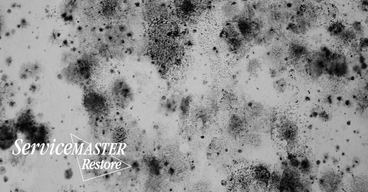 Mold Removal in Locust Grove, VA