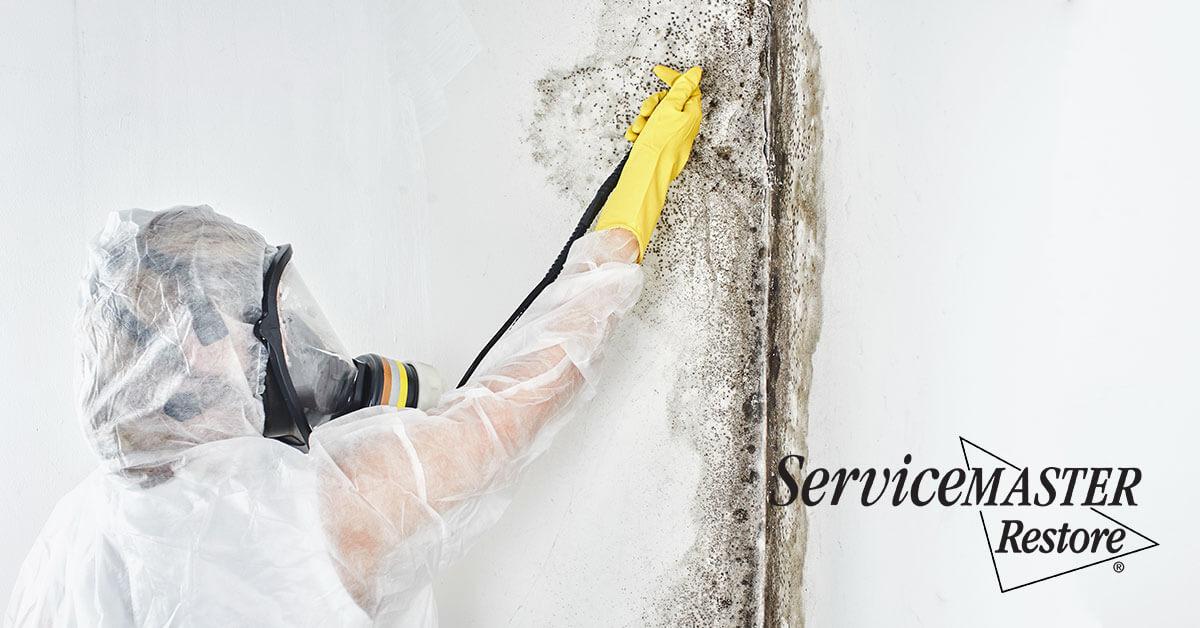 Mold Removal in Louisa, VA