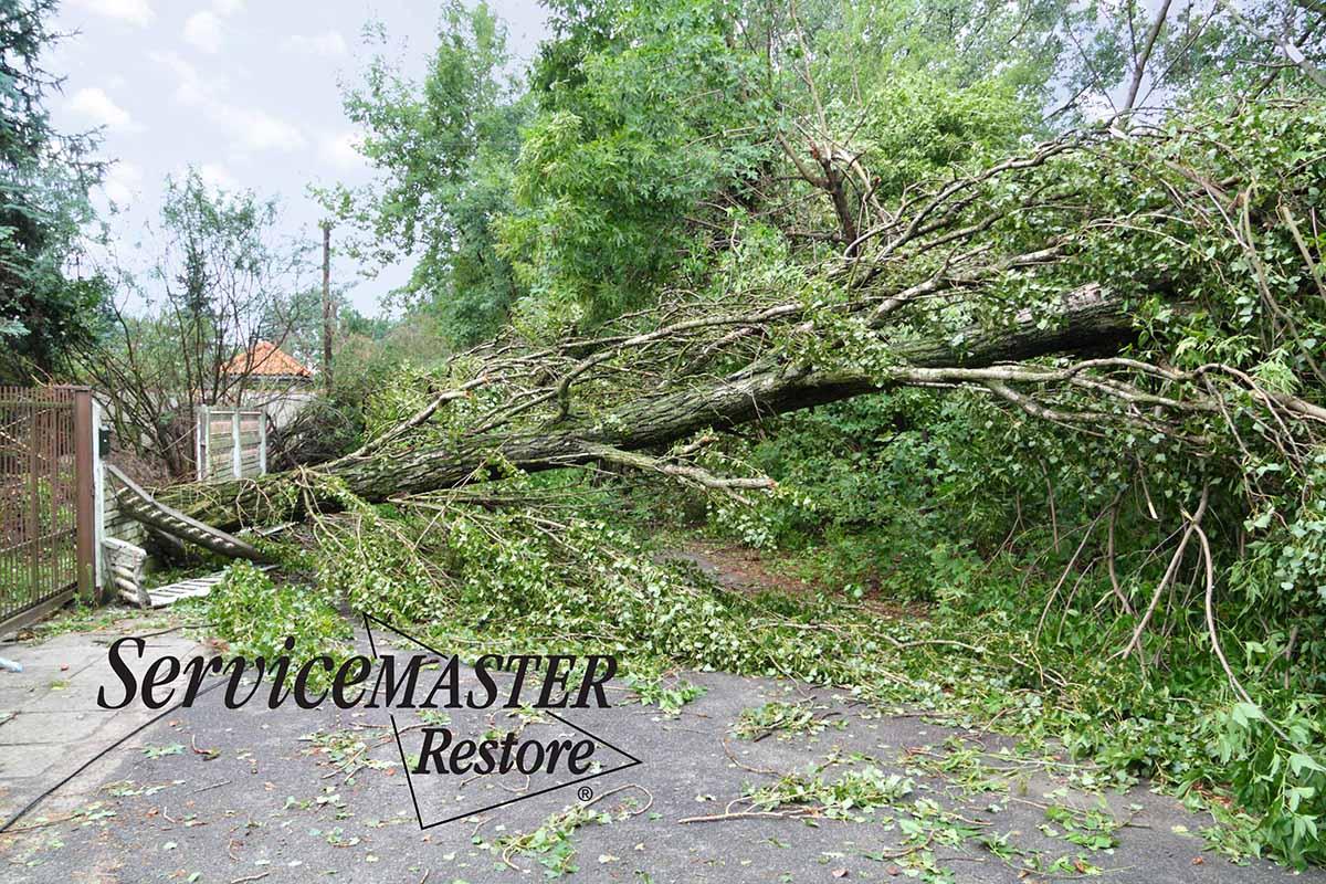 Wind Damage Remediation in Berea, KY