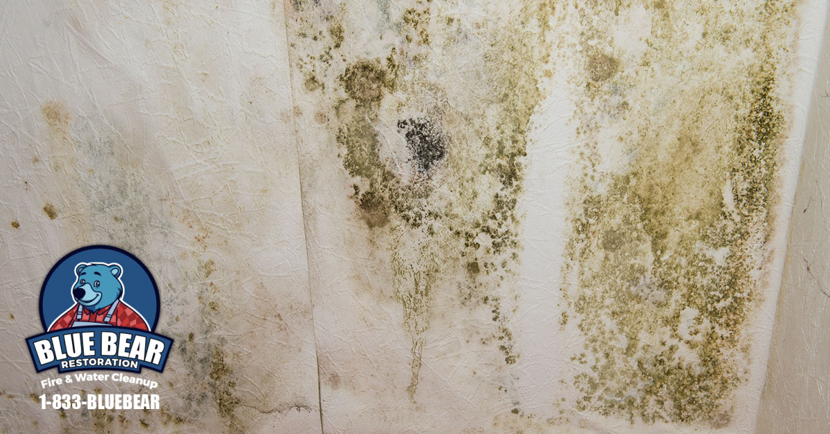 Mold Remediation in Churchville, NY