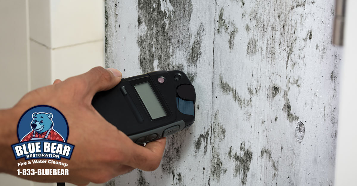 Mold Remediation in Pittsford, NY