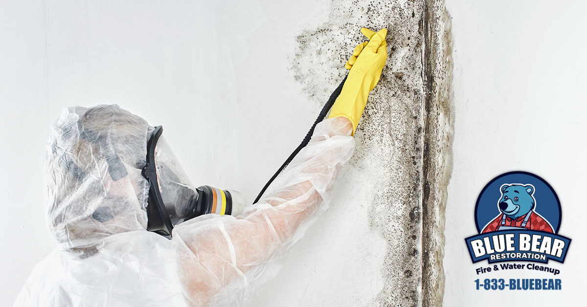 Mold Abatement in Pittsford, NY