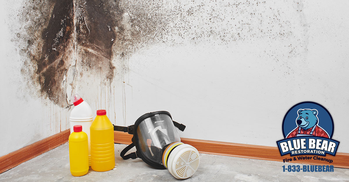 Mold Remediation in Buffalo, NY