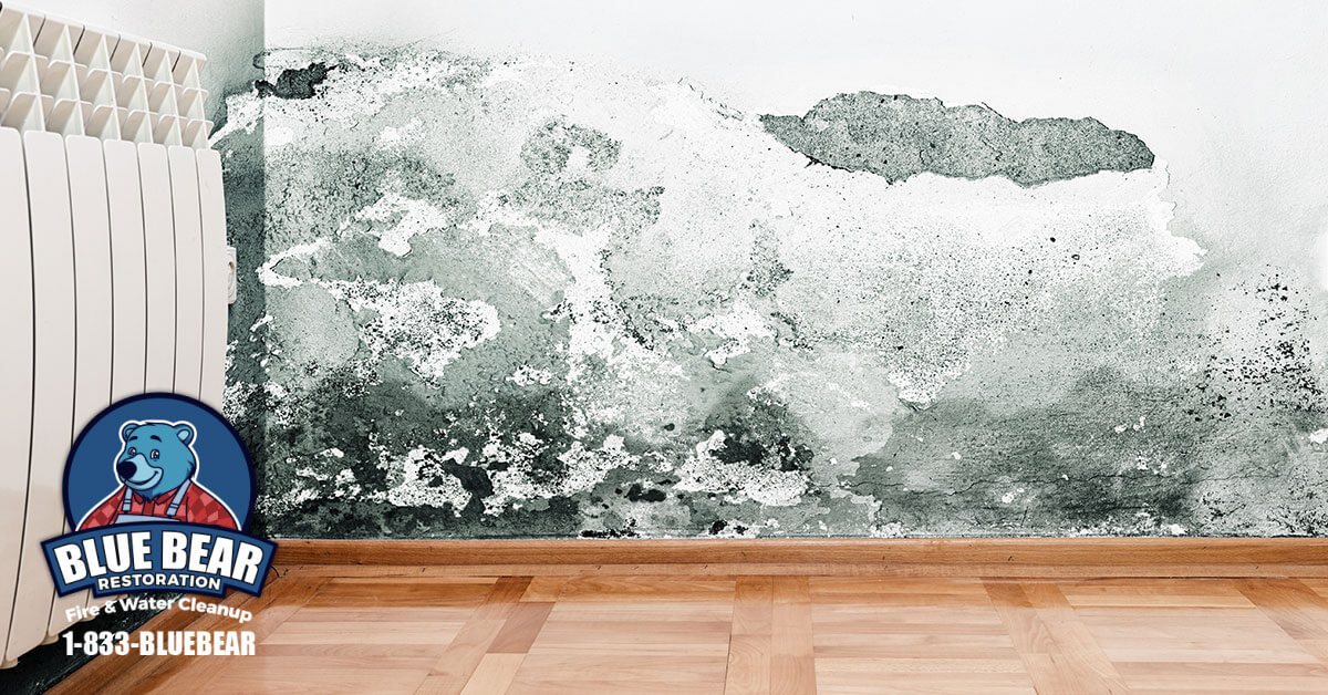 Mold Removal in Rochester, NY
