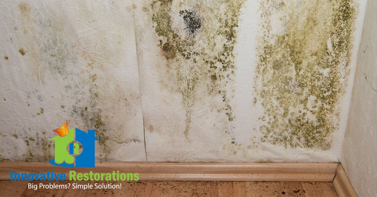 Mold Remediation in Cookeville, TN