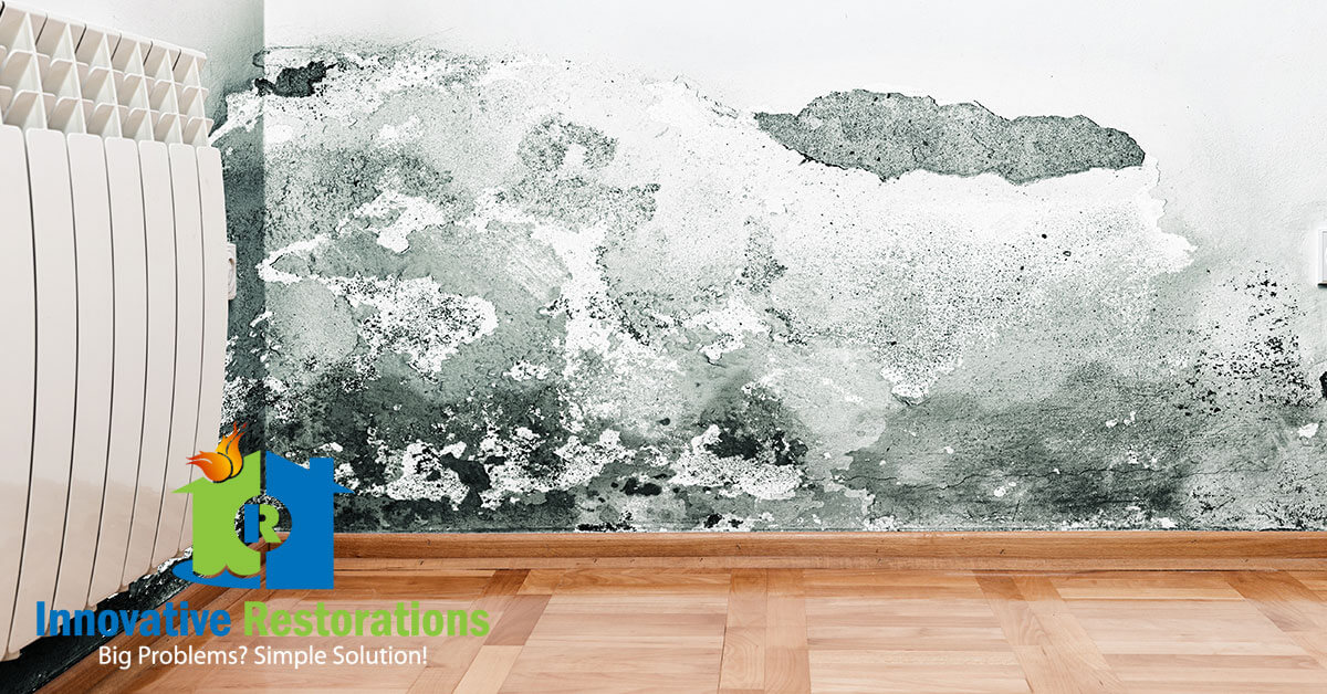 Mold Removal in Jamestown, TN