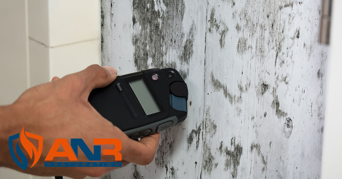 Mold Removal in River Bluff, KY