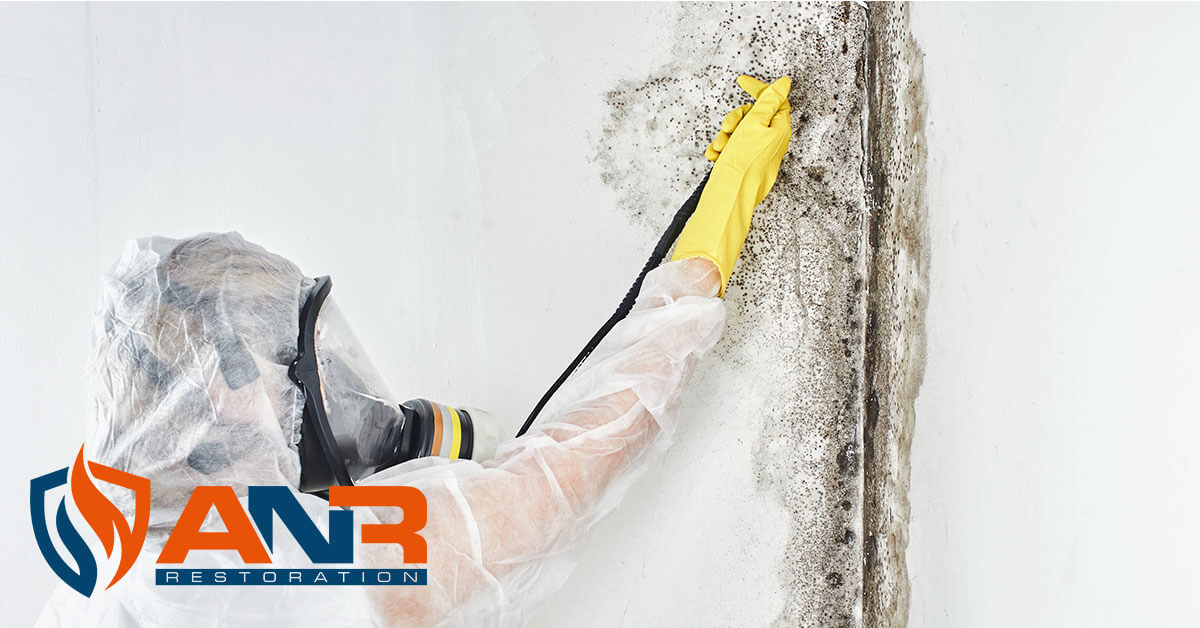 Mold Remediation in Greenville, IN