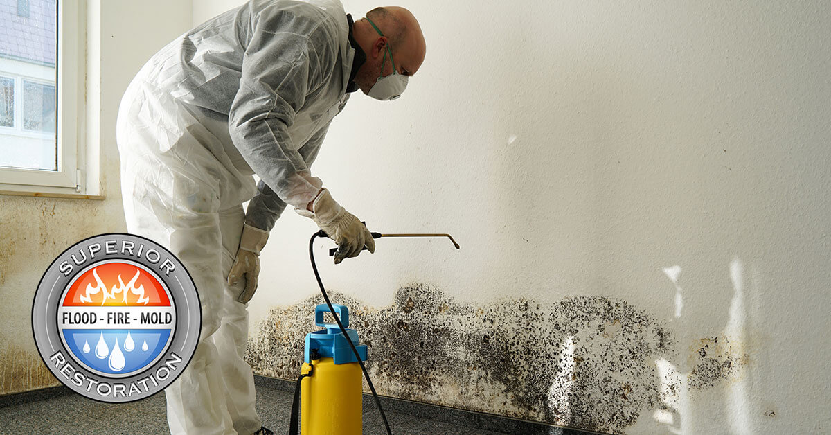 Mold Damage Restoration in Del Mar, CA
